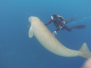 Saw a Dugong while I was diving in vanuatu